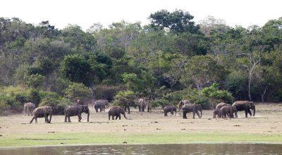 Lahugala National Park - 02