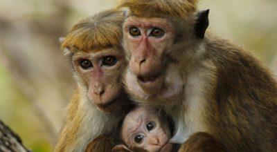 monkey tour_m