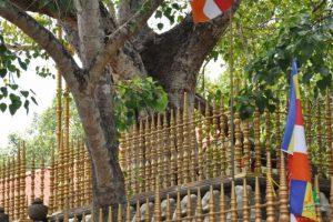 sri-maha-bodhi-tree-in-anuradhapura-3