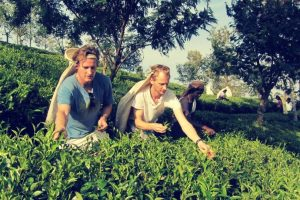 tea_plantation_columbus_tours