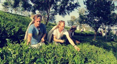 tea_plantation_columbus_tours